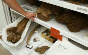 В США обнаружили новый вид динозавра