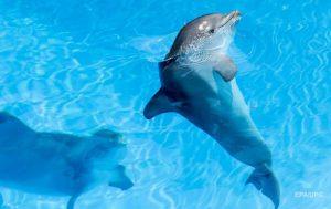 Во Франции зафиксировали рекордную массовую гибель дельфинов